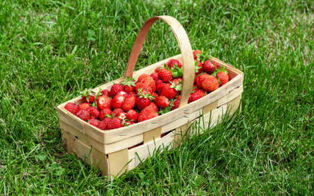 Wooden basket with handle, red strawberries on background of green grass closeup. Juicy, fresh berries, picked in garden, lie in box on lawn. Colorful photo taken on sunny day in country. Side view. 免版税图像