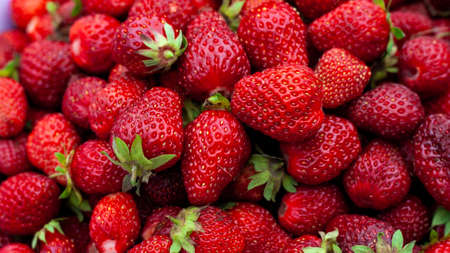 Many Juicy beautiful red freshly picked strawberries. Healthy and wholesome Food background.  Natural strawberries closeup, top view. Macro shot of strawberry texture in sunny day Banner for web site