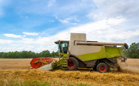 Combine harvester harvests ripe wheat in field, against of trees and beauty blue sky with clouds. Reaping machine. Procurement of cereal seeds by combine for flour production. Side view, close up 免版税图像