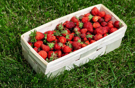 Wooden basket with red strawberries on background of green grass closeup. Juicy, fresh berries, picked in garden, lie in box on lawn. Colorful photo taken on sunny day in country. Side view 免版税图像