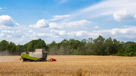 Combine harvester harvests ripe wheat in field, against of trees and beauty blue sky with clouds. Reaping machine. Procurement of cereal seeds by combine for flour production. Side view. Banner site