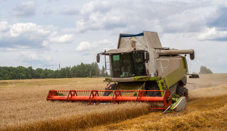 Modern combine harvester harvests ripe wheat in field, against background of forest and sky. Collecting seeds of cereals with reaping machines on farm. View front closeup. Horizontal. Cutting ears