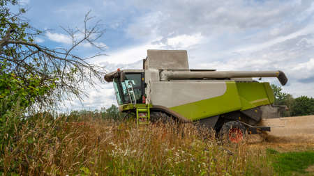 Modern combine harvester for harvesting wheat, working in field. In front him are bushes and thickets of grass against background of forest and sky. Collecting seeds of grain crops. Side view closeup