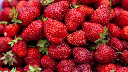 Many Juicy beautiful red freshly picked strawberries. Food background.  Natural strawberries close-up, top view. Macro shot of strawberry texture. Healthy and wholesome food. Banner for web site