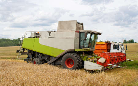 Collecting wheat grain with a modern combine, unloading seeds into a truck. Harvesting grain crops with a combine harvester on the field, background of trees and blue sky with clouds. Banner site