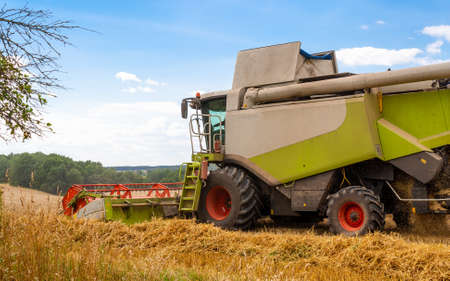 Combine harvester harvests ripe wheat in field of trees and beautiful blue sky with clouds. Reaping machine. Procurement of cereal seeds by combine for flour production. Side view, close up