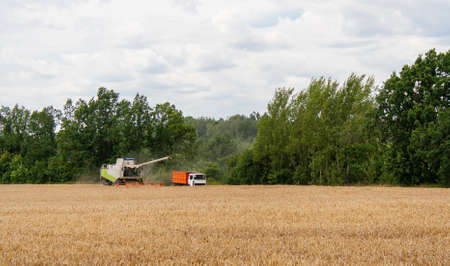 Collecting wheat grain with modern harvester unloading seeds into truck trailer in distance. Harvesting grain crops with combine harvester on field against background of tree and blue sky with clouds