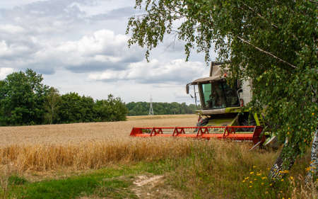The cabin of modern combine and blades are visible from the birch trees. Working in the field during the wheat harvesting season on a sunny day. Harvesting machine harvesting seeds of cereal crops 免版税图像