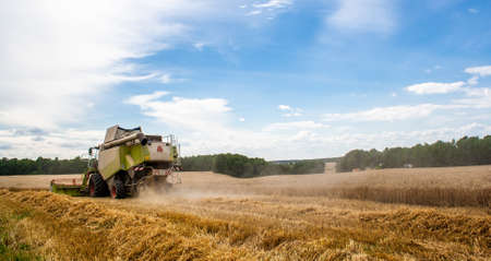 Combine harvester harvests ripe wheat in field with trees and beautiful blue sky with clouds. Reaping machine. Procurement of cereal seeds by combine for flour production. Side view. Banner site 免版税图像