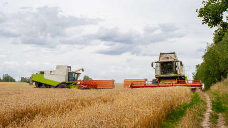 Two combine harvesters harvests ripe wheat in the field, against the background of the forest and sky with clouds. Collecting seeds of cereals with special equipment on the farm. Banner for site
