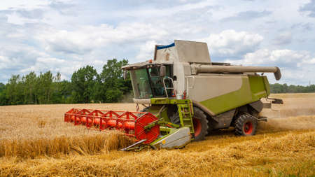 Combine harvester harvests ripe wheat in field, against of trees and beautiful blue sky with clouds. Reaping machine. Procurement of cereal seeds by combine for flour production. Side view, close up