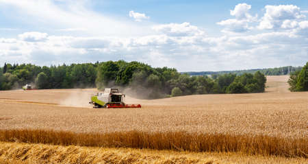Two modern combines at work in field during wheat harvesting season on sunny day. Harvesters harvest seeds of grain crops on collective farm against backdrop of forest blue sky. View afar. Banner site