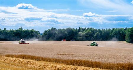 Two modern combines at work in field during wheat harvesting season on sunny day go towards each other. Harvesters harvest seeds of grain crops against backdrop of forest, sky and trucks. View afar 免版税图像