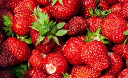 Juicy beautiful red freshly picked strawberries. Food background. Many natural strawberries close-up, top view. Macro shot of strawberry texture. Healthy and wholesome food. Banner for web site