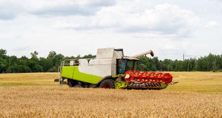 Modern combine harvester in collection of wheat grain, prepare to unload seeds into truck. Harvesting grain crops with combine harvester on field, against background of forest and sky with clouds