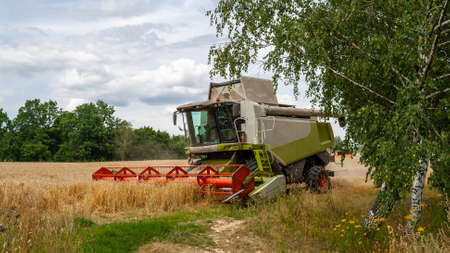 Modern harvester at work in field during gold wheat harvesting season on sunny day. Harvesting machine harvesting seeds of grain crops leaves from behind trees. Side view closeup. Banner for web site 免版税图像