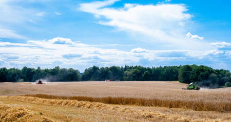 Two modern combines at work in field during wheat harvesting season on sunny day go towards each other. Harvesters harvest seeds of grain crops against backdrop of forest, blue sky and trucks. Banner
