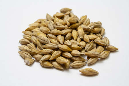 Barley malt on a white background. Heap of cereal grains isolated close up. Seeds of barley, wheat, oats, rye, triticale macro shooting. Natural dry grain in the center of the image