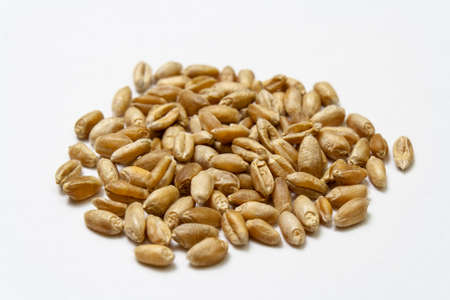 Wheat grains on a white background. Heap of cereal grains isolated close up. Seeds of barley, wheat, oats, rye, triticale macro shooting. Natural dry grain in the throughout the image 免版税图像