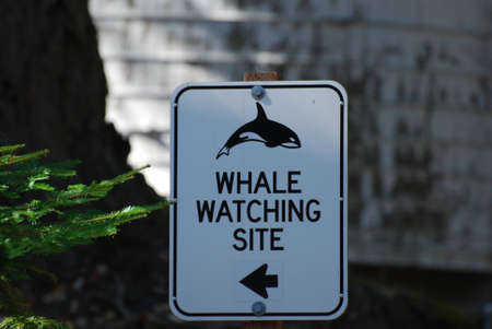 Whale Watching Site Sign on San Juan Island, Washington State photo