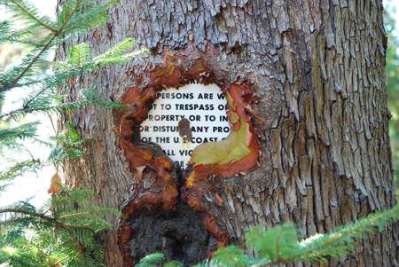 enveloping: Tree Trunk Growing Around and Enveloping Metal Sign