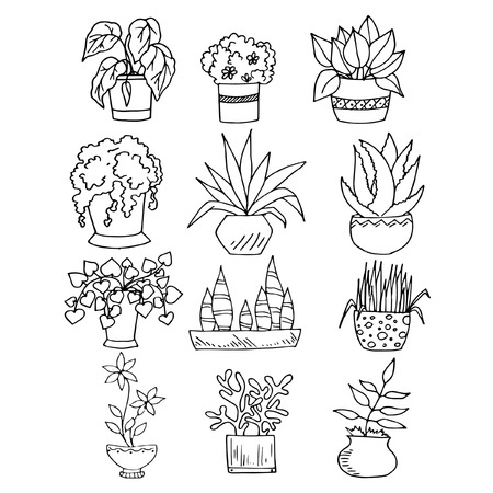 set of sketches with houseplants in pots, black and white image on white, hand drawing style, vector illustration Illustration