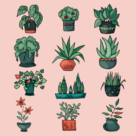 set sketches with houseplants in pots, colorful image on pink background, hand drawing style, vector illustration