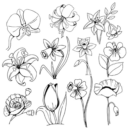 a set of garden flowers, individual design elements, black and white sketches on a white background, hand drawing, vector illustration Vektorové ilustrace