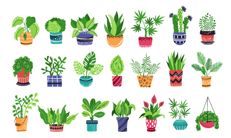 Large set of home plants or flowers in pots, home garden or greenhouse, collection of isolated elements on white. Flat style, Scandinavian. Vector illustration