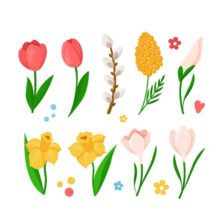 Cartoon Easter Day spring flowers set - tulips, daffodil, narcissus, mimosa, snowdrop, willow branch, isolated items on white for greeting cards, poster, print, fresh spring plants - vector