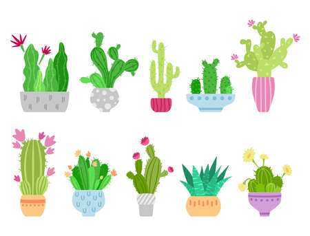 Cartoon cactus and succulent clipart - isolated cute potted cacti images on white background, vector bundle with desert green blooming palnts, colorful icons set