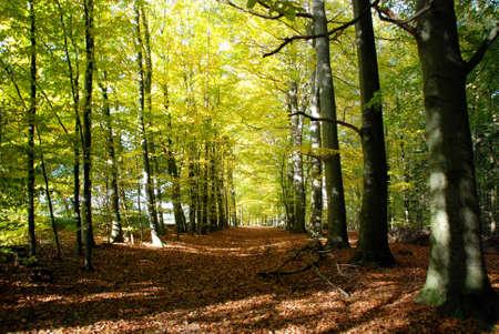 Waldweg photo