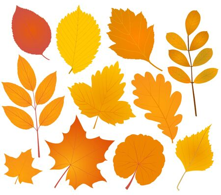 gold and red: Various autumn leaves silhouettes collection . Vector illustration.
