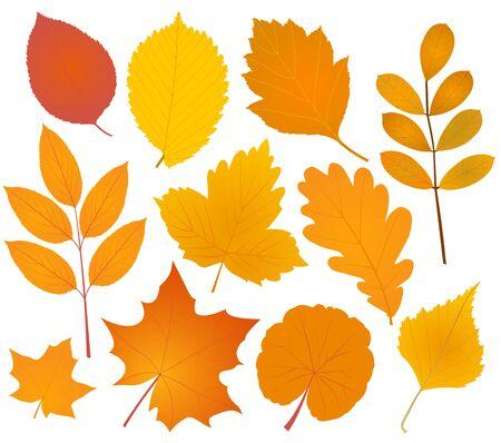 Varias hojas de otoño colección de siluetas. Ilustración del vector.