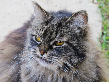 Abandoned feral cat - Do not abandon your pet