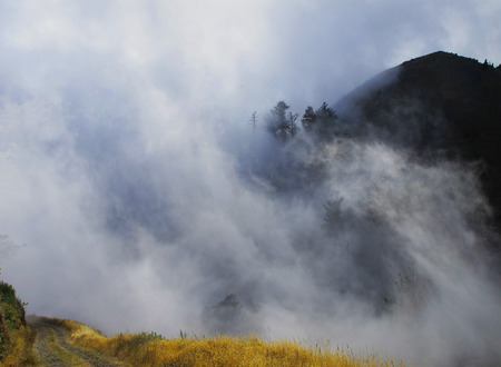 Mysterious fog in Madeira mountains