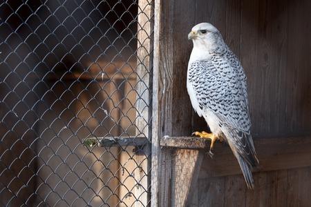 A close up portrait of a eagle owl. Banco de Imagens