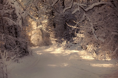 Winter snowy sunset view in Russian National Park