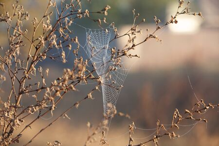 Beautiful sunny amazing sparkling spiderweb. Charming organic scenic background. Beauty of morning time concept.