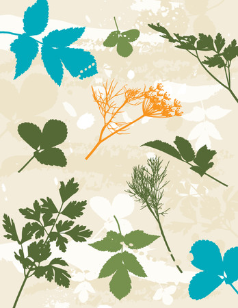 separable: scented, clipart, contour, drawing, graphic, natural, nature, grunge, design, season, orange, fennel, vector, flower, stalk, plant, color, brush, shape, grass, curve, green, herb, stem, crop, dill, leaf, illustration, stylization, composition, silhouette, background, creativity, decoration, separable, abstract, parsley, cartoon, tracing