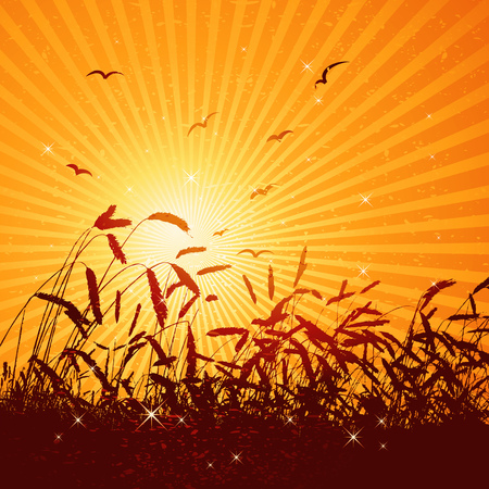 brilliance: modern, season, summer, vector, yellow, spring, floral, style, plant, color, brush, wheat, curve, field, spot, corn, leaf, bird, art, sky, sun, red, design, sunset, grunge, sowing, nature, detail, natural, sunrise, graphic, morning, drawing, clipart, tracing, cartoon, abstract, radiance, wallpaper, separable, creativity, decorative, brilliancy, background, silhouette, brilliance, coruscation, composition, stylization, illustration