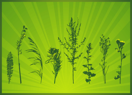 modern, season, summer, vector, green, spring, floral, style, plant, color, curve,  leaf, art,  design, nature, detail, natural, graphic, drawing, clipart, tracing, cartoon, abstract, radiance, wallpaper, separable, creativity, decorative, background, silhouette, composition, stylization, illustration, grass, flower, spray, stalk, blade, landscape, light, design, frame, herb, simple, leaf Vector