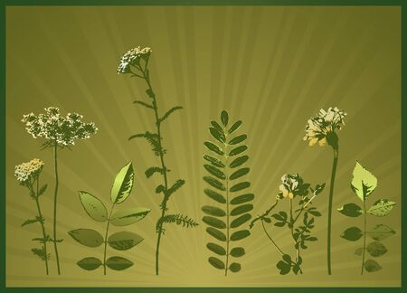 milfoil: modern, season, summer, vector, yellow, spring, floral, style, plant, color, curve,  leaf, art,  design, nature, detail, natural, graphic, drawing, clipart, tracing, cartoon, abstract, radiance, wallpaper, separable, creativity, decorative, background, silhouette, composition, stylization, illustration, grass, flower, spray, stalk, blade, landscape, light, design, frame, herb, simple, leaf, milfoil, yarrow , dandelion