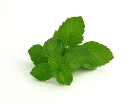 spearmint: fresh green spearmint  isolated over white background