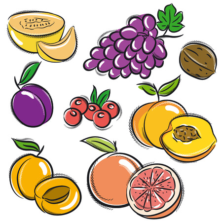set of fruits, grapes,melon,apricot,peach, vector Vector