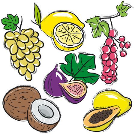 papaya: set of fruits, lemon,grapes,fig, papaya, coconut, currant, vector