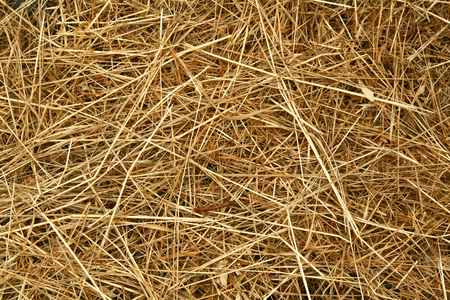A background of dry yellow grass suitable for the texture of your design.