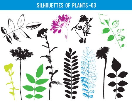 Silhouettes of parts of plants, leaves, flowers, vector illustration Ilustracja