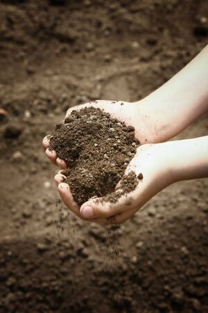 Childrens hands hold in a handful of brown soil that falls slightly down.