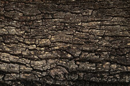 Bark texture background pattern crack old brown for design. Rough texture of natural wood